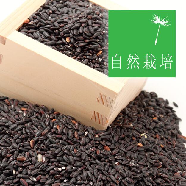 自然栽培 黒米